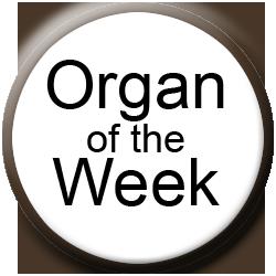 Allen Organ of the Week